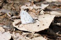 蝶に出会えました。 - takiのカメラ散歩~☆