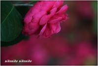 『紅の美』と義母 - 今が一番
