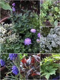 春庭が大好きです。「ガラにもなく軍手片手に寄せ植えなど・・・」編 - 岡山の実家・持家・空き家&中古の家をリノベする。