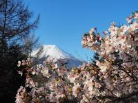 新倉山桜祭り - ☆Kick-Off!
