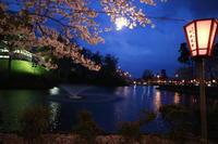 高田公園宵桜を歩く - 風の彩り-2