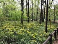 泉の森・雑木林に咲く山野草 - つれづれ日記