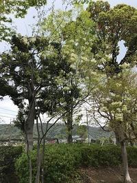球場公園の花など - つれづれ日記