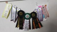Cat show report. No 2 - MINKWIN Cattery &Pretty Aki
