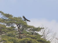 ブログ休止 - 『彩の国ピンボケ野鳥写真館』