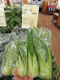 かわいい野菜発見! - げんきの郷の日々