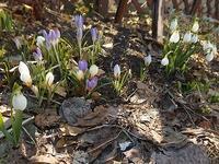 ゆっくりな春の訪れ - 北緯44度の雑記帳