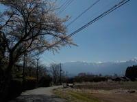 桜と雪山 - 冬青窯八ヶ岳便り
