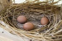 鶏のいる日常 - 良え畝のブログ