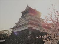 『小倉城と桜』 - 花と夢遊び