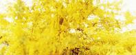 「LUFTONE」oyama megumim2018.4.11〜6.28 - COTTON STYLE CAFE 浦和の美容室コットンブログ