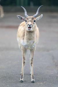 4月11日(水)実直 - ほのぼの動物写真日記
