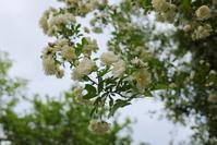 枝垂れる - お庭のおと
