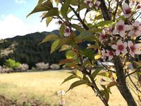 名栗の春 - ヒビノコト。