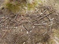 木の枝を落すお仕事 - 北軽井沢スウィートグラス