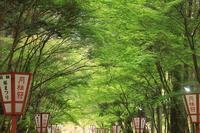 京都・醍醐寺 - 暮らしの中で