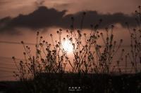 第839回   春の夕暮れ - 湘南群青 -The sunset  blue -