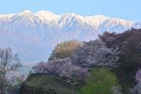 伊根谷で白い山と桜を眺める - 峰さんの山あるき