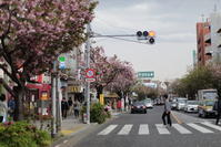 桜新町 - i feel fine