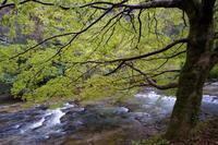 八重滝川にて - じじ & ばば の Photo blog