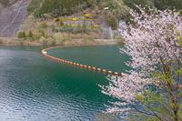 名栗湖に慰めていただきます・・・ 2018年4月8日 - 暗 箱 夜 話 【弐 號】