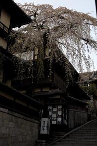 桜って、、、☆彡 - DAIGOの記憶