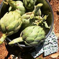 我が家の菜園日記 n.23 ~ 春の畑だより♪ - La Tavola Siciliana  ~美味しい&幸せなシチリアの食卓~