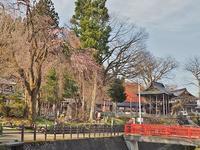 千手院の桜はまだ蕾 - 浦佐地域づくり協議会のブログ