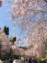日帰り滋賀の旅まずは MIHO MUSEUM へ - mayumin blog 2