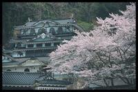 佐和山遊園の桜 - びっと飴