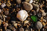 浜地はメノウ - Beachcomber's Logbook