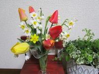✿✿春満載✿✿ - 拝啓 よねこさま