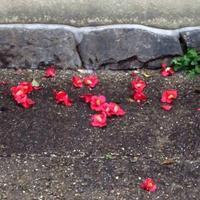 「資産寿命」が尽きる時 - 鯵庵の京都事情