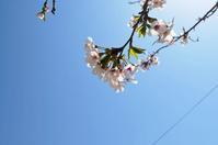 2018,4,3 地元の桜ver2 その2 - 死すべきキモオタ~或いは怠惰な脂肪の塊~