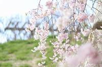 山田グリーンパーク / マーゴ(mar_go) - ちょこちょこ4