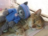 本物 VS 偽物 Cat どっちがかわいい? Part.10 - ヴィンテージ・シュタイフと仲間たち