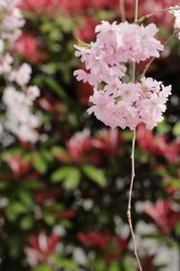 うずくまっていたら春はもう… - お花畑で微笑んで**