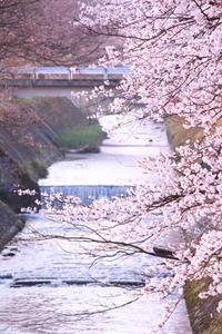 ご近所のsakura ⑤ 2018/04/10 - 虹のむこうには何が見える?