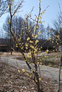 3月の庭 - ハーブガーデン@諏訪中央病院