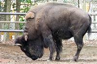 さらば家畜の原種ゾーン - 動物園放浪記