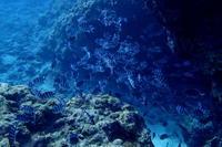 18.4.13春だらけ - 沖縄本島 島んちゅガイドの『ダイビング日誌』