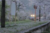 桜と鉄道の風景#6 - あ お そ ら 写 真 社