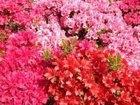 春色 - 青空自主保育てぃだのふぁ ブログ