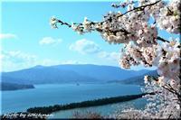 山陰山陽、桜の旅(1) - 北海道photo一撮り旅