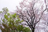 武蔵野紀行9 - はーとらんど写真感