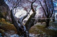 浅き春(2) - シセンのカナタ