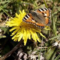 4月のイギリス・スコットランドの生きものたちのくらしハナさんのブログより - ブルーベルの森-ブログ-英国カントリーサイドのライフスタイルをつたえる