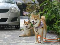 パン屋さんと柴犬 - yamatoのひとりごと