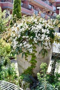 ガーデン&クラフツのクレマチス - 小さな庭 2