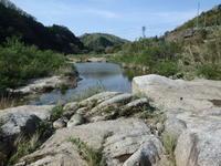 アオサナエの羽化を観に… - 加茂のトンボ (トンボ狂会)